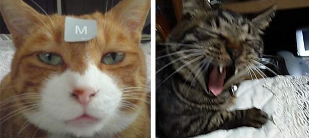 【今日のにゃんこ】笑いを追求!大喜利が大好きな猫「コウジちゃん」「ジュニアちゃん」