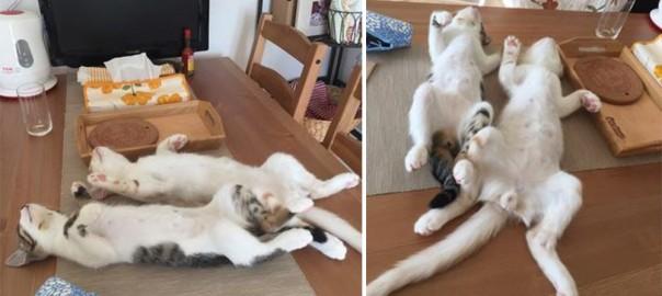 【にゃんこのシンクロ開き】姉弟ネコの寝相がツッコミを入れたくなるほど同じ(画像4枚)