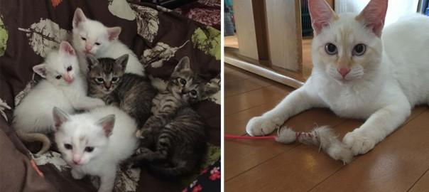 【今日のにゃんこ】最初は五つ子でした!絵本に出てきそうな猫「テッちゃん」