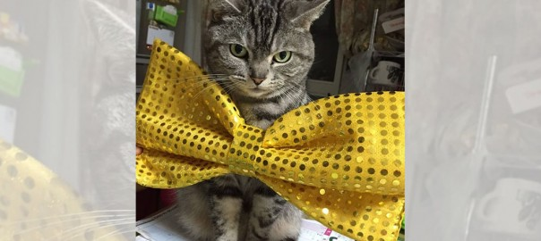 【今日のにゃんこ】芸人リボンも着こなすおしゃれネコ「ちゅーちゃん」