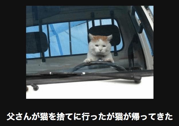 捨て猫 アメーバ大喜利