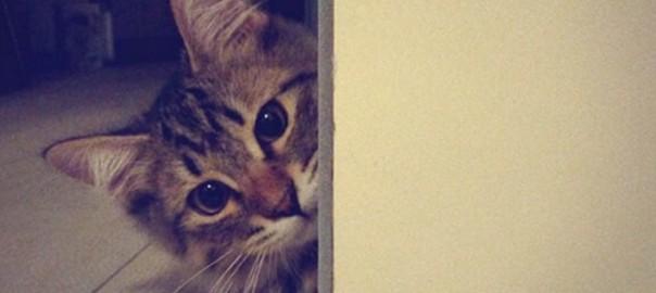 【今日のにゃんこ】帰りが遅いのは許さにゃい!ご主人大好き猫「Uni(ウニ)ちゃん」