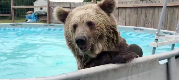 「やった~!」プールで子どもみたいにはしゃぐクマが激かわ