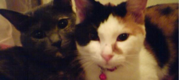 【今日のにゃんこ】みんなと仲良くできちゃう先住猫「ミトンちゃん」と「ボトンちゃん」