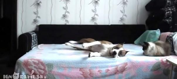 カメラは見た!ベッドに上がるのを禁止されたワンコの留守番中の様子