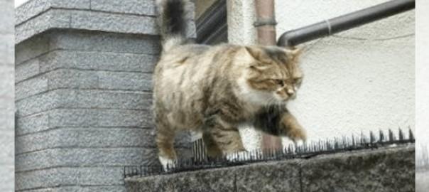 トゲトゲを物ともせず進むコワモテの猫。彼の行く先にあるものとは・・・?