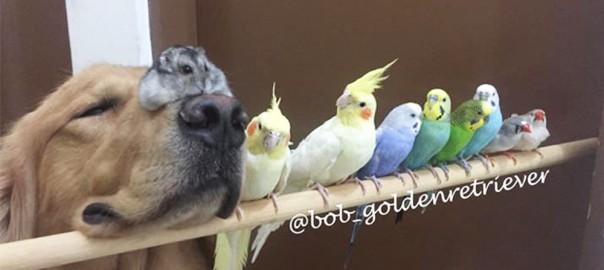 【ボブと愉快な仲間たち】犬とインコとハムスターの幸せ大家族にほっこり(画像18枚)