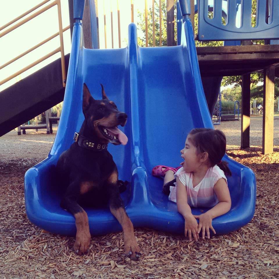 ドーベルマンと女の子
