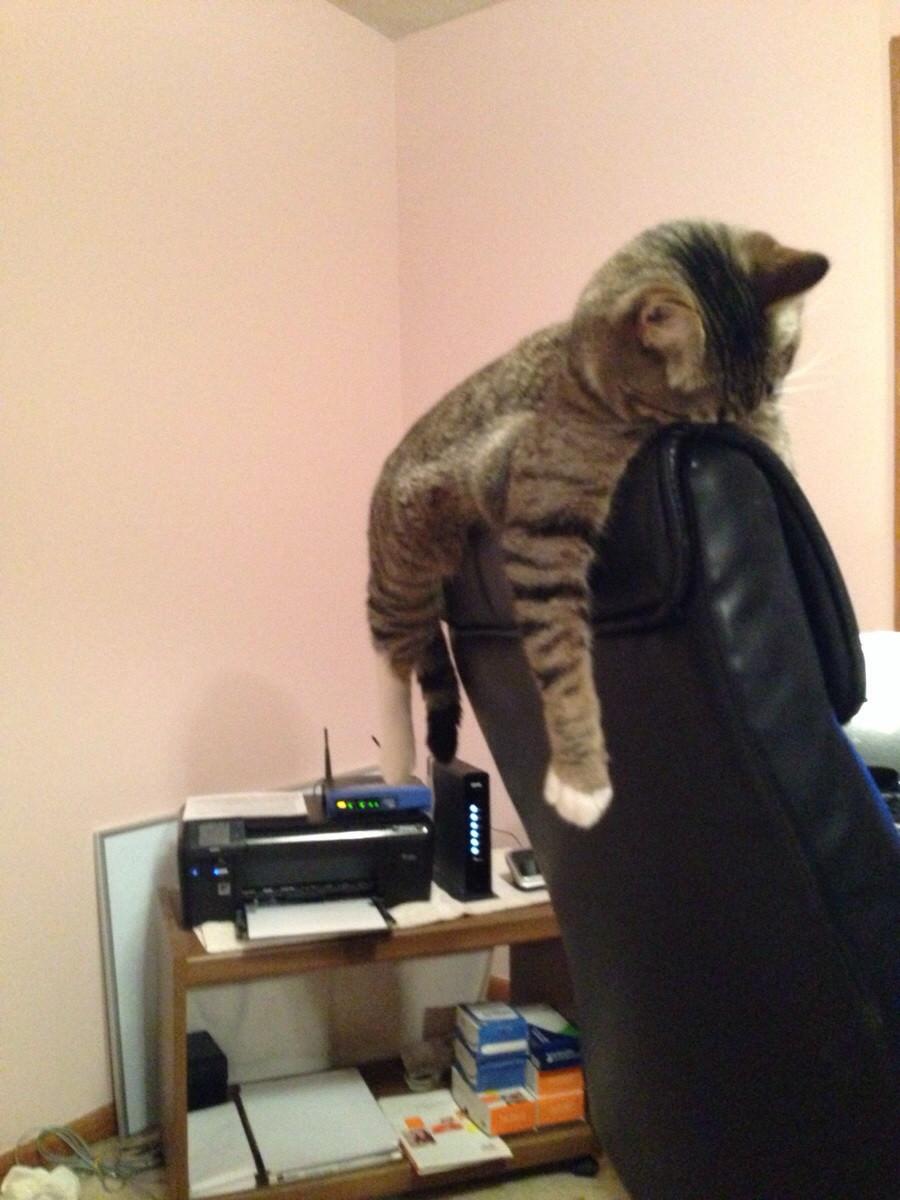 変な寝相の猫