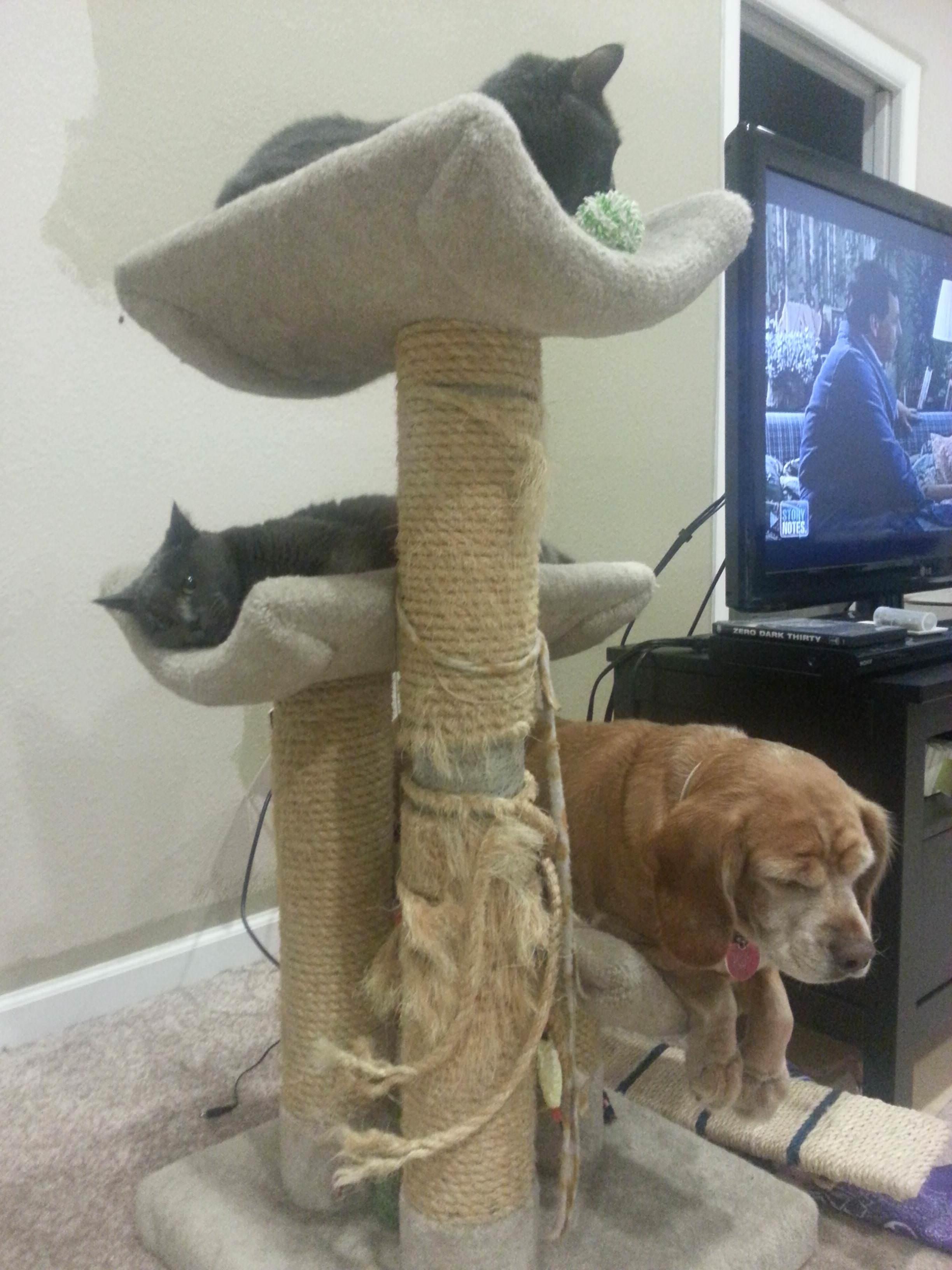 猫だと思っている犬
