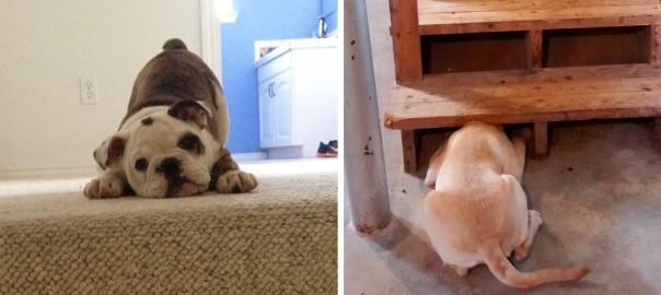 そんなに怖いか!(笑) 階段の登り方と降り方が独特すぎる犬10選