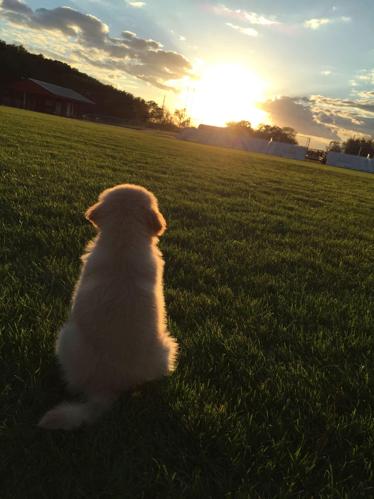 太陽を見つめる子犬