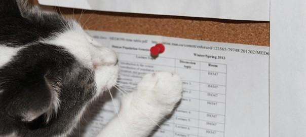 【天才的なひらめき】ある猫によるご主人へのイタズラが卑劣すぎる(笑)