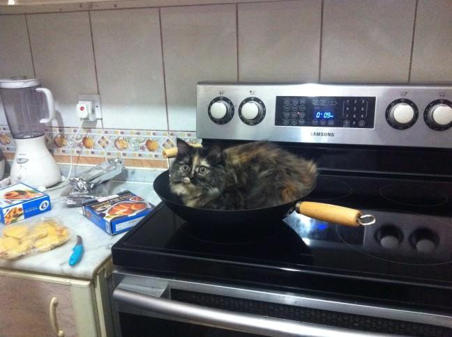 フライパンの中の猫