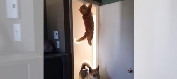 猫は忍者の末裔であるとわかる13の証拠