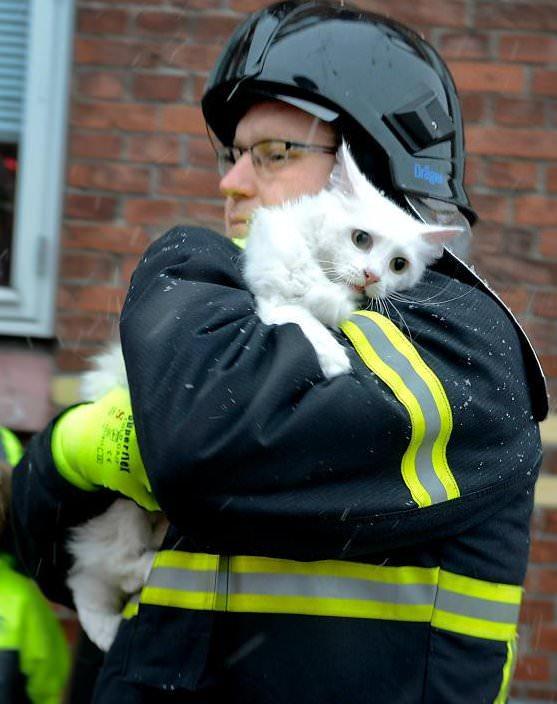 猫を抱える消防士