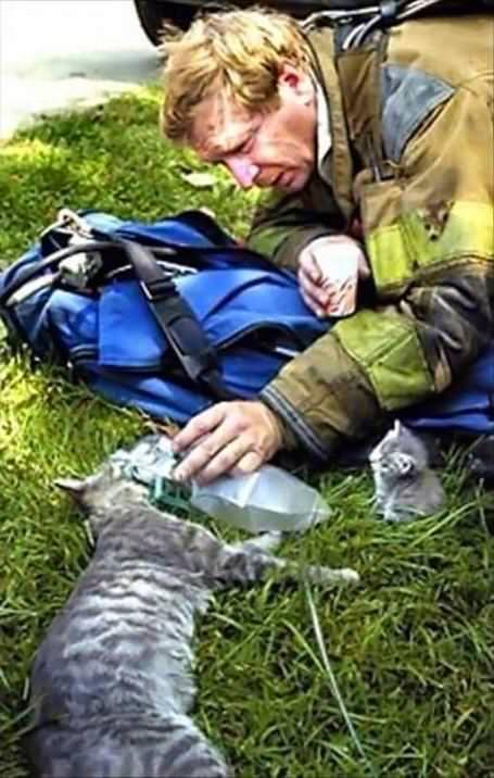 猫を救助する消防士