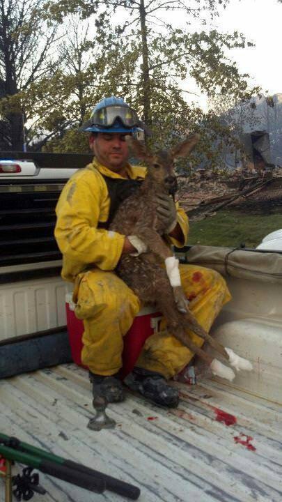 鹿を助ける消防士