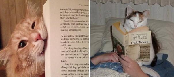 本とボクどっちが大事にゃの?! ネコ好きの読書時間は短いとわかる11の画像