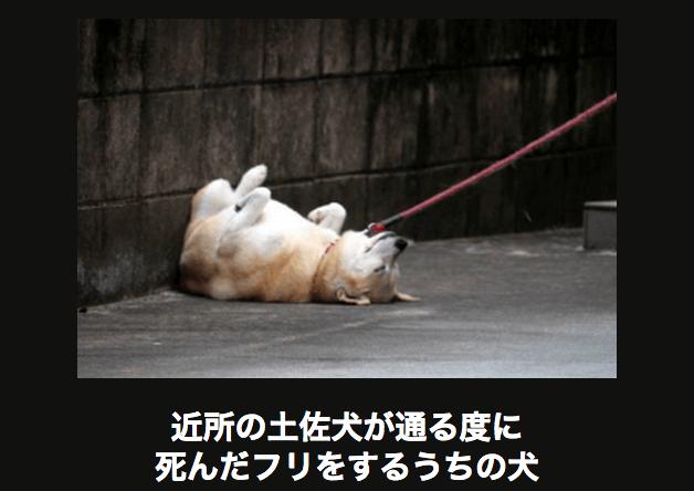 アメーバ大喜利の「近所の土佐犬が通る度に死んだふりをするウチの犬」の画像