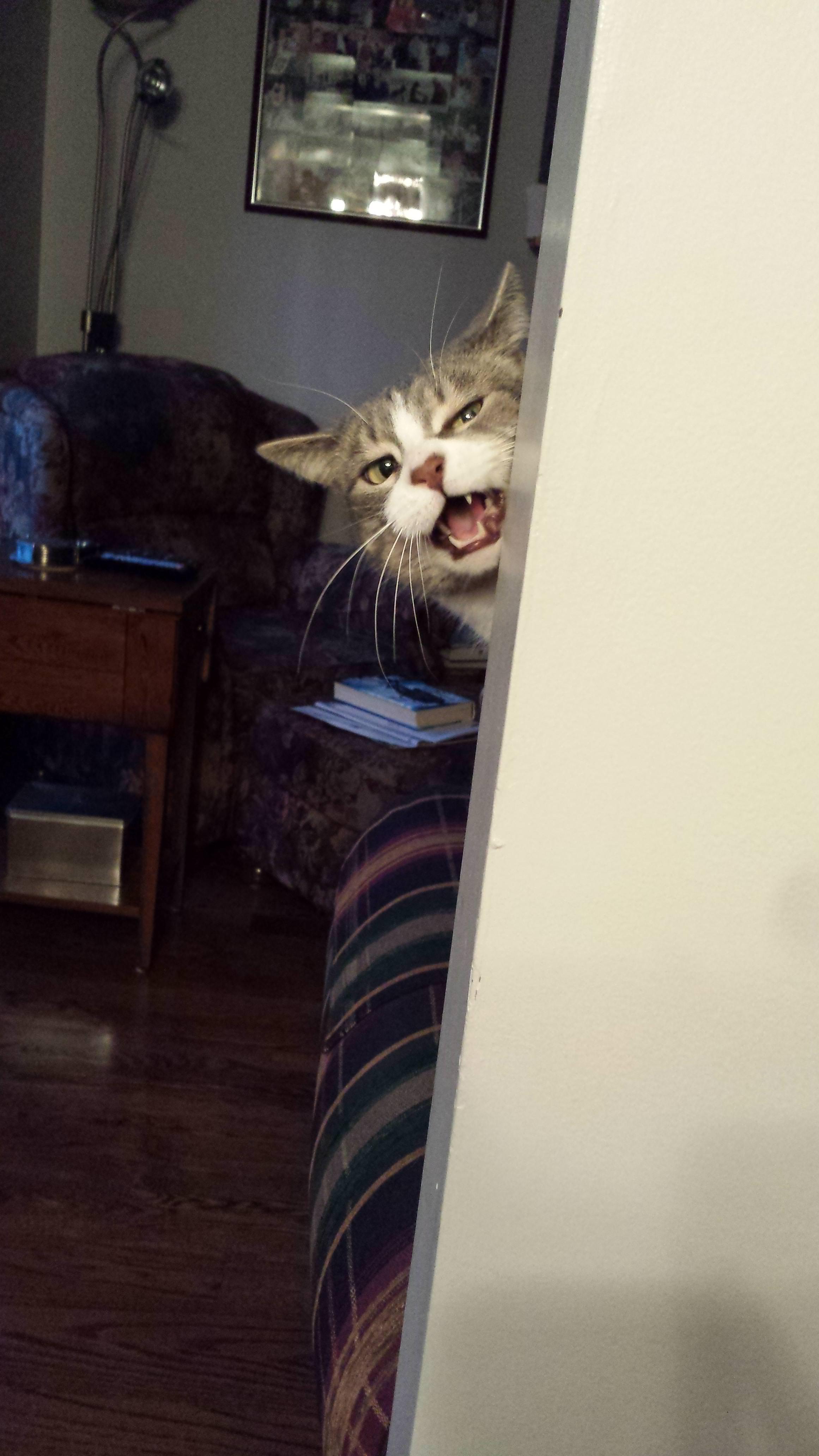 面白い顔の猫