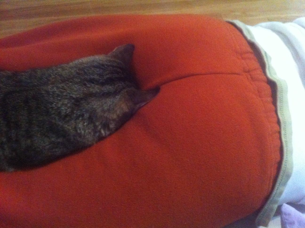 お尻の近くで寝る猫