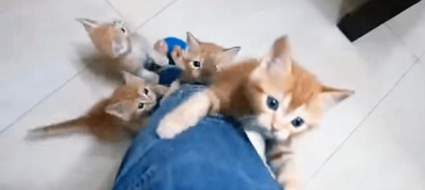 これぞニャンコ天国♡ 次々と足をよじ登ってくる子猫たちに悶絶