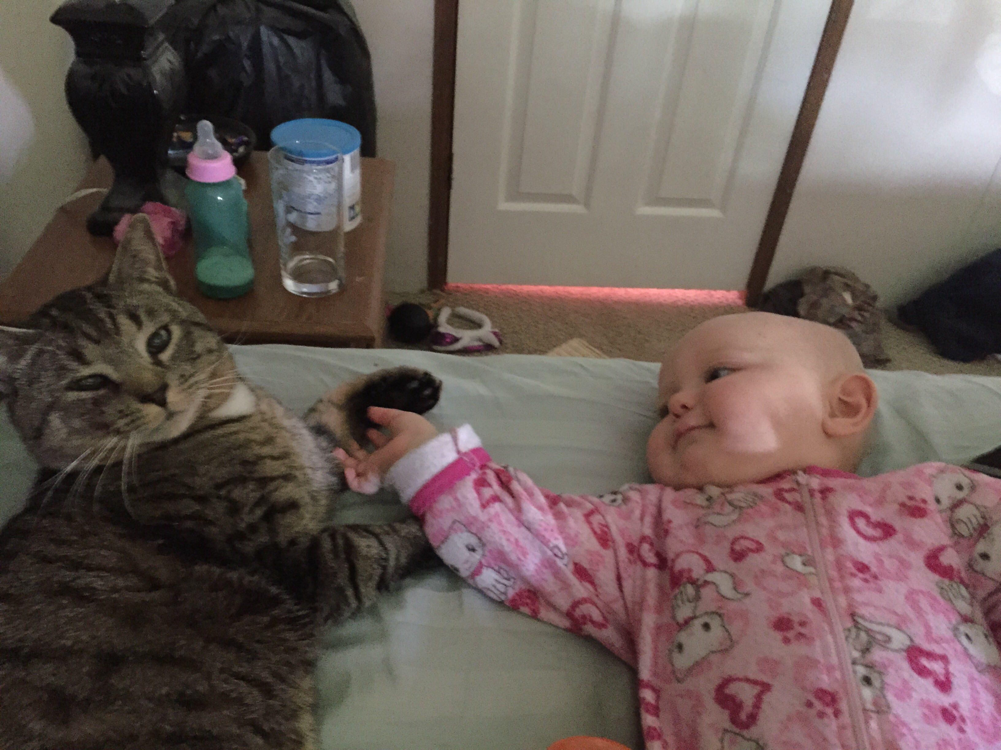 仲良しの猫と赤ちゃん