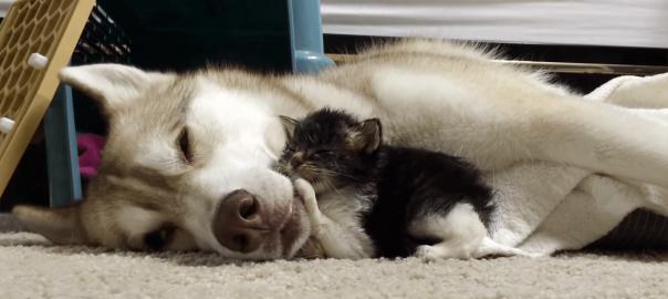 愛が命を救う!瀕死の子猫を救ったワンコの愛情に感動