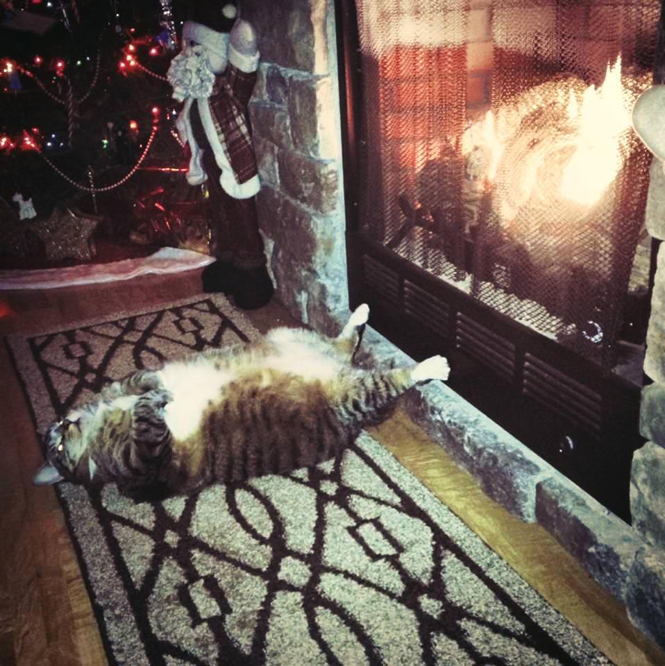 暖炉の前で寝る猫