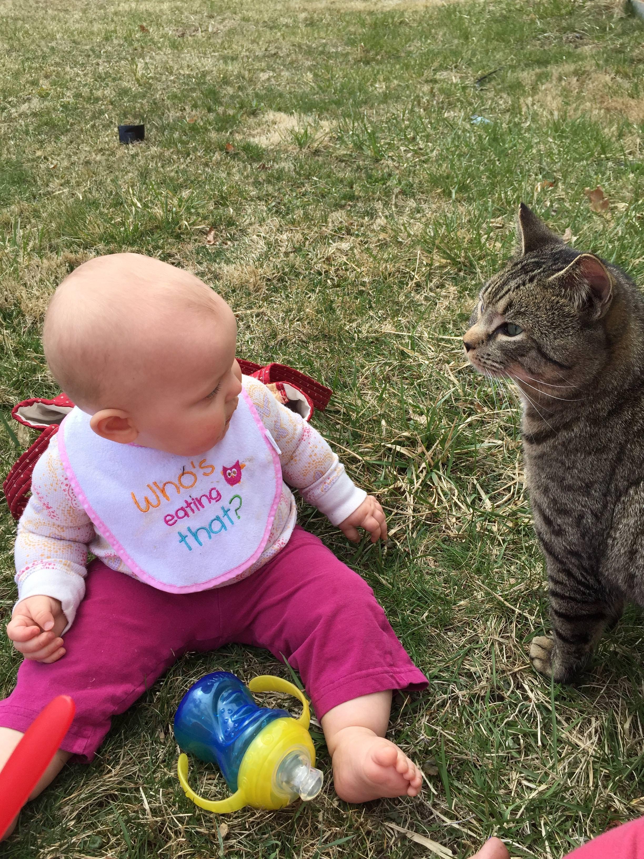 一緒に遊ぶ赤ちゃんと猫