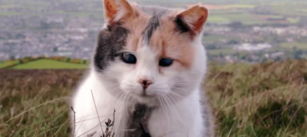 いつでも一緒に。目の不自由な猫がご主人と山登りに挑戦