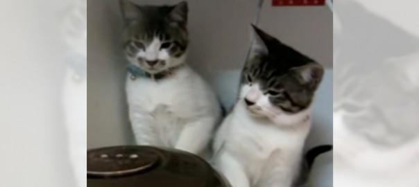 【かわいすぎる闘い】にゃんこ VS 炊飯器が完全にコント
