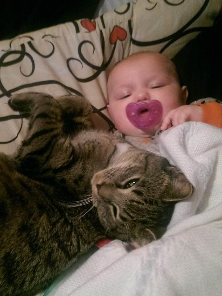 一緒に寝る猫と赤ちゃん