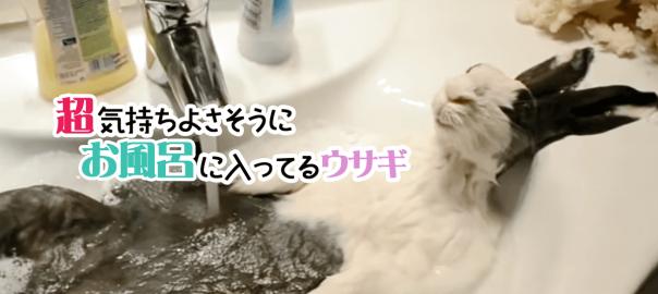 くつろぐにも程がある!超気持ちよさそうにお風呂に入ってるウサギ
