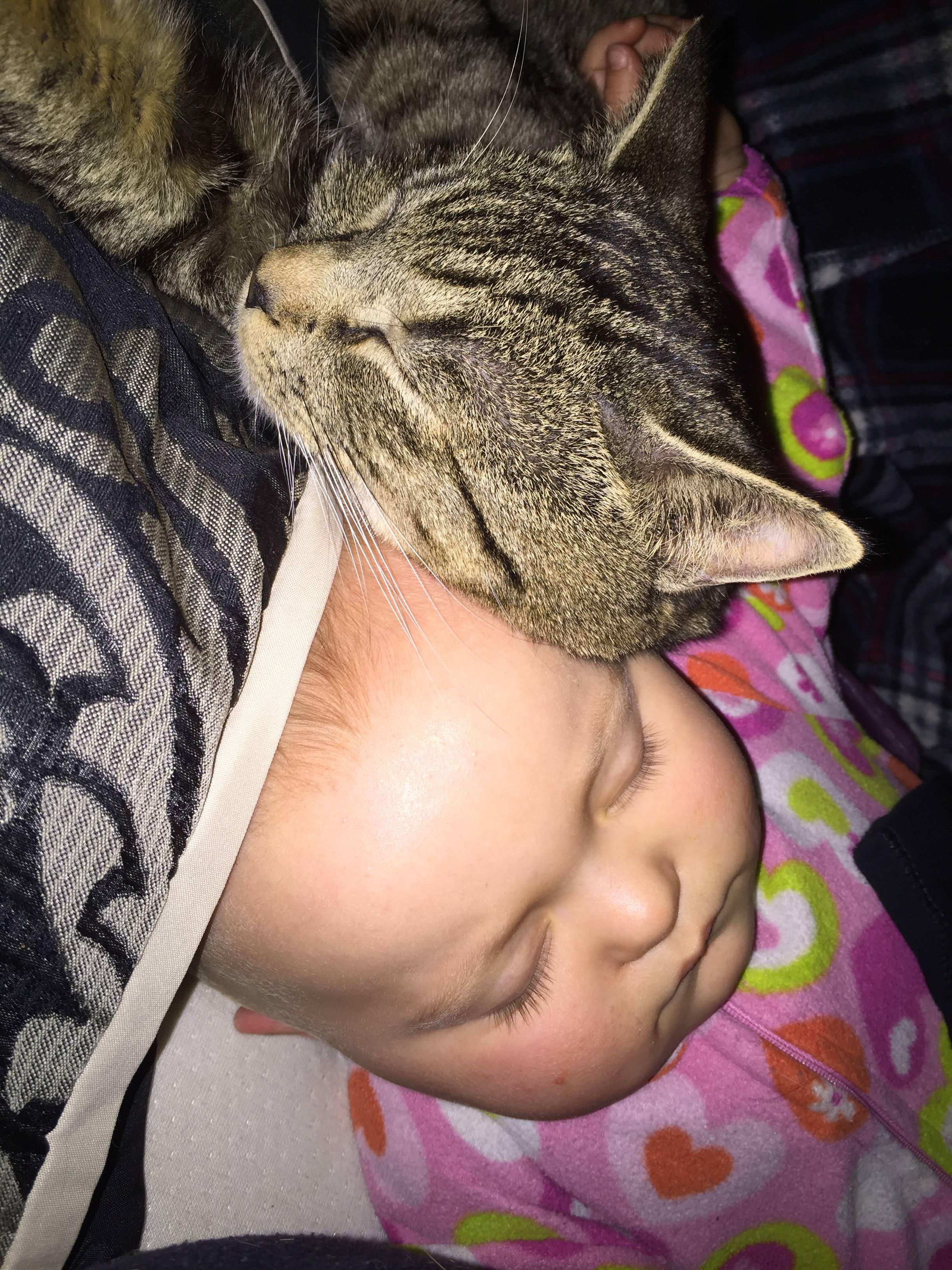 一緒に寝ている赤ちゃんと猫