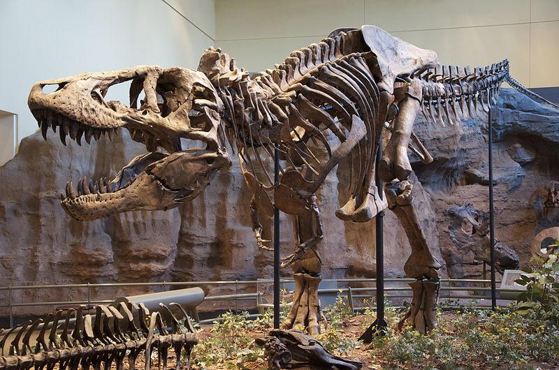 ティラノサウルスの標本