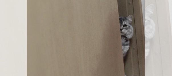 【今日のにゃんこ】ずーっと見ていても飽きないモフモフ猫「ダンテちゃん」