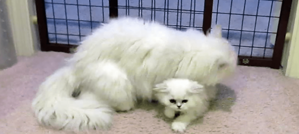 愛情爆発!試練を乗り越えた子猫をペロペロなめて溺愛する母猫