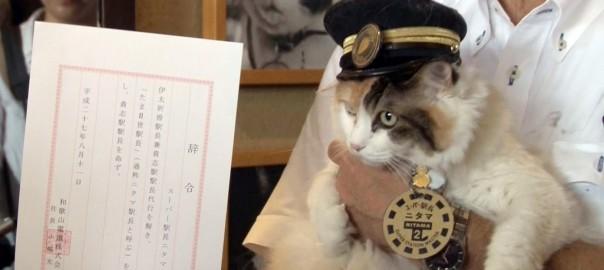 たま駅長の想いを胸に!貴志駅の新駅長に三毛猫「二タマ」が選ばれた