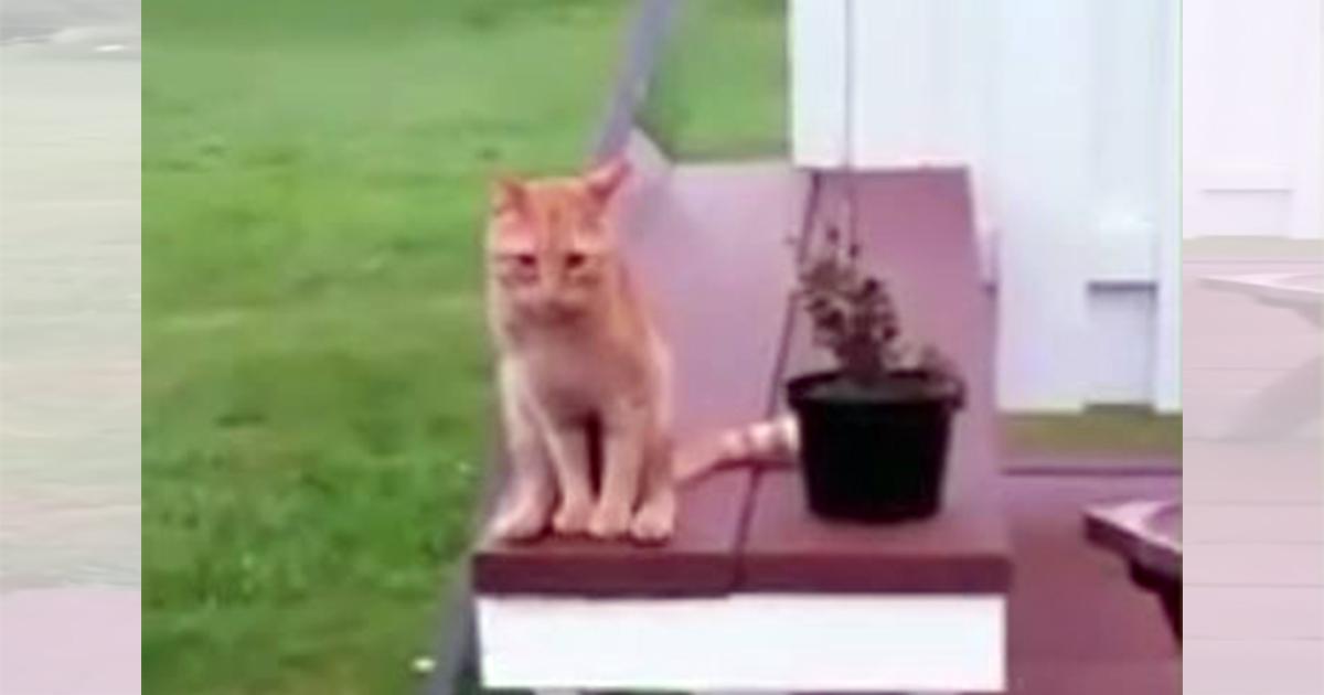 セクシー猫