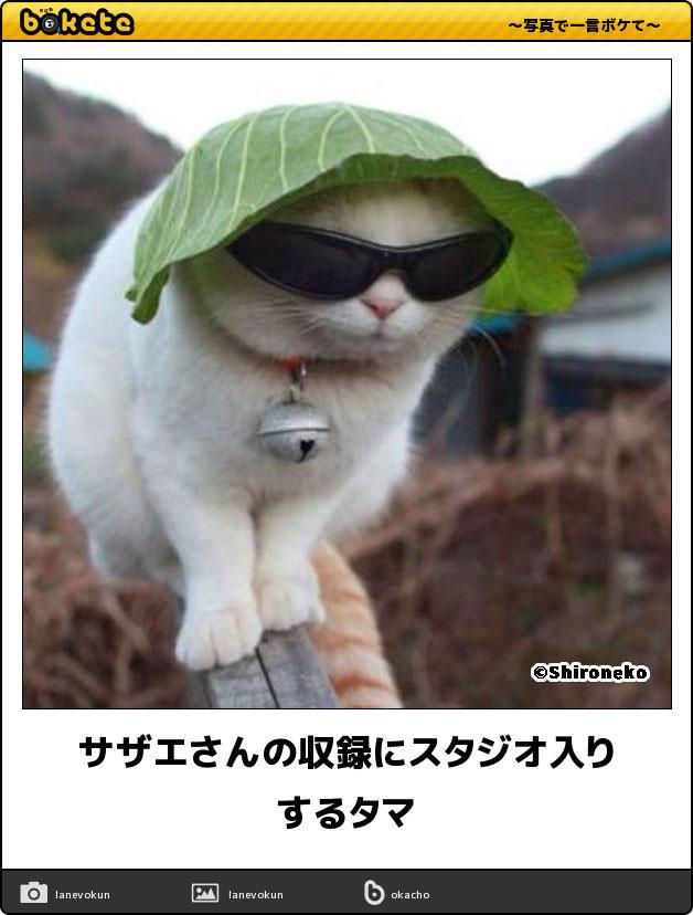 吹いたら負け】3秒で笑う猫の傑作ボケて16選