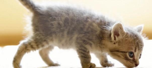 地上に降りた天使!手乗りサイズの子猫がテクテク歩いて愛おしい
