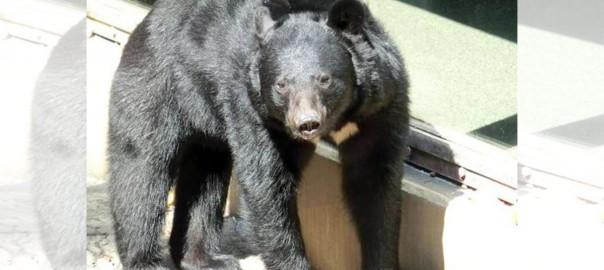 マジか?! クマが人間を襲うとき、◯◯から食べる!