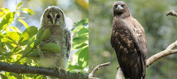 衝撃!上野動物園のフクロウやワシが食べている『真っ赤な食べ物』とは?
