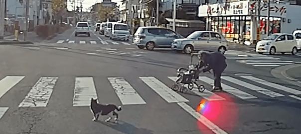 カメラは見た!横断歩道を渡るおばあちゃんを気遣う優しいニャンコ