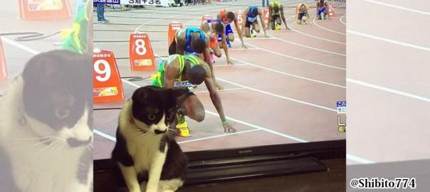 【10レーン目の刺客】猫とテレビの組み合わせが無駄にジワジワ来る(画像10枚)