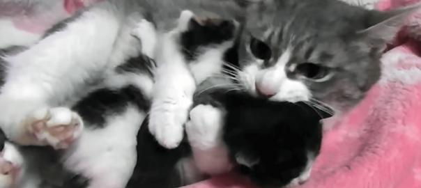 2匹同時にムギュ~!子猫たちへの愛が溢れ出ているお母さんニャンコ