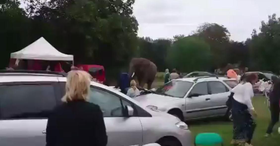 ゾウ フリーマーケット