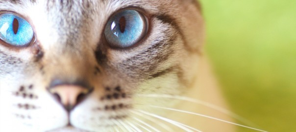 3秒で分かる!猫の脱水症状の兆候をチェックする簡単な方法